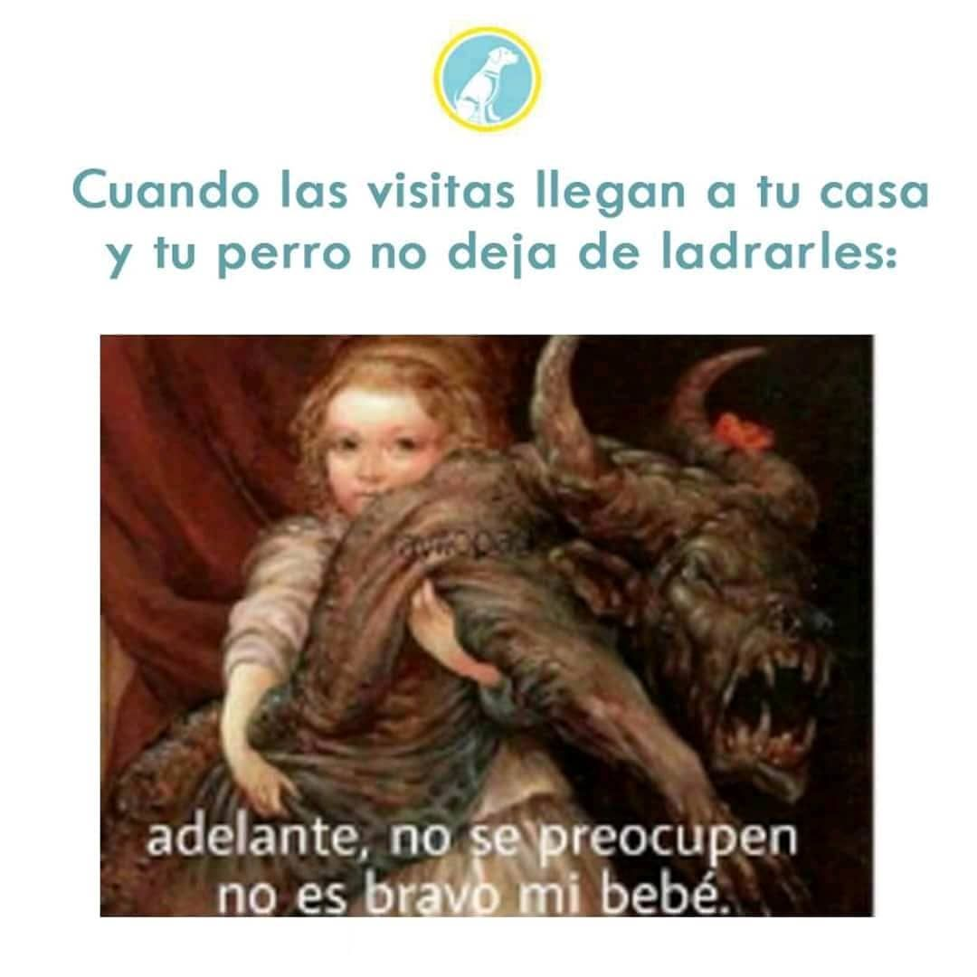 Pin De Carolina Fonseca En Memes Perros Veterinaria Mascotas