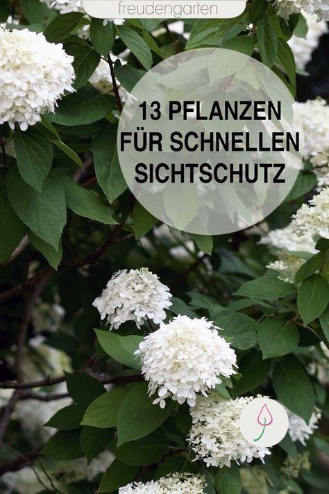 Schnell wachsende Pflanzen #blumenfürgarten