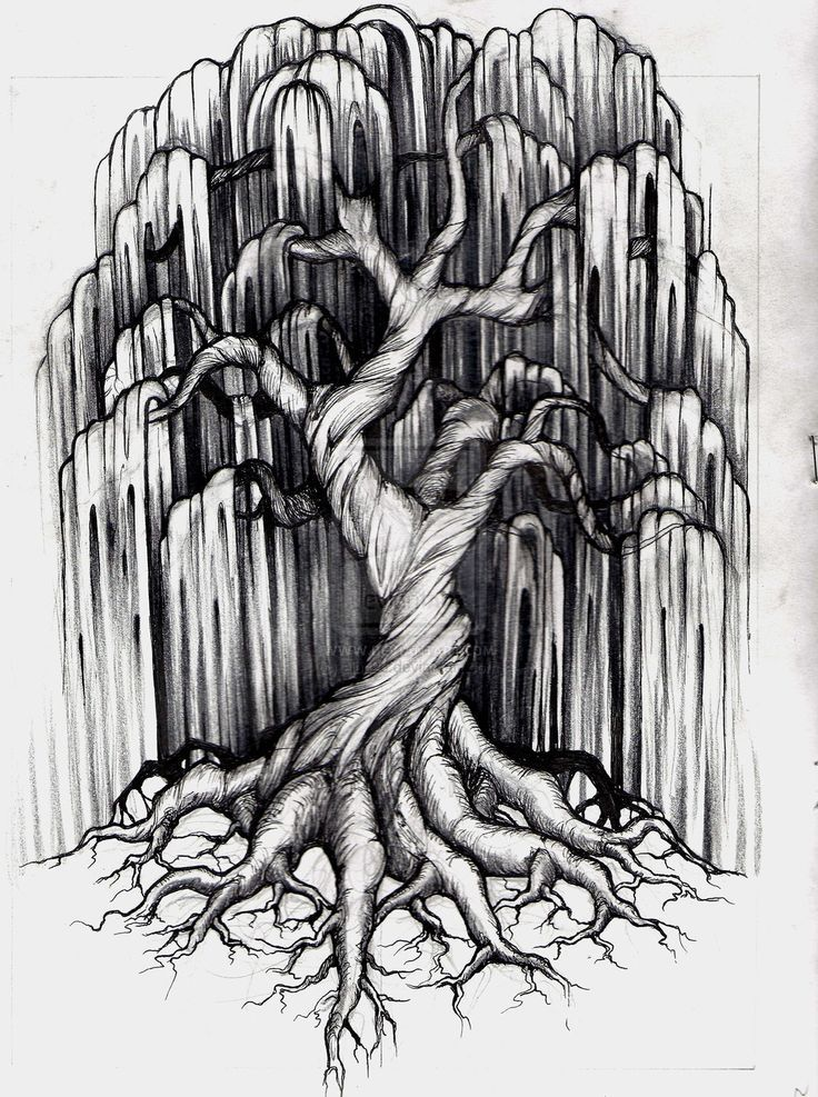 Willow Tree Symbol Image Collections Free Symbol Design Online
