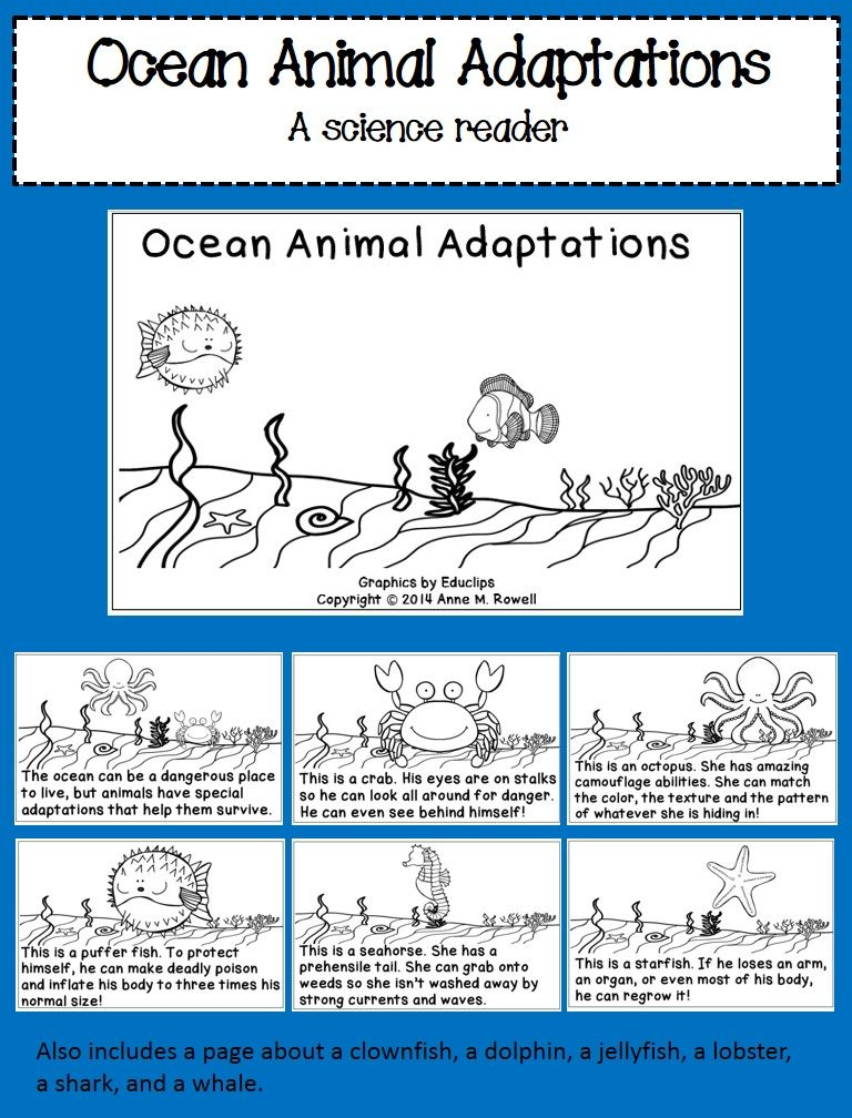 Ocean Animal Adaptations A Science Reader Animal
