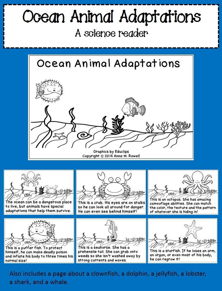 Ocean Animal Adaptations Science Reader Animal Adaptations