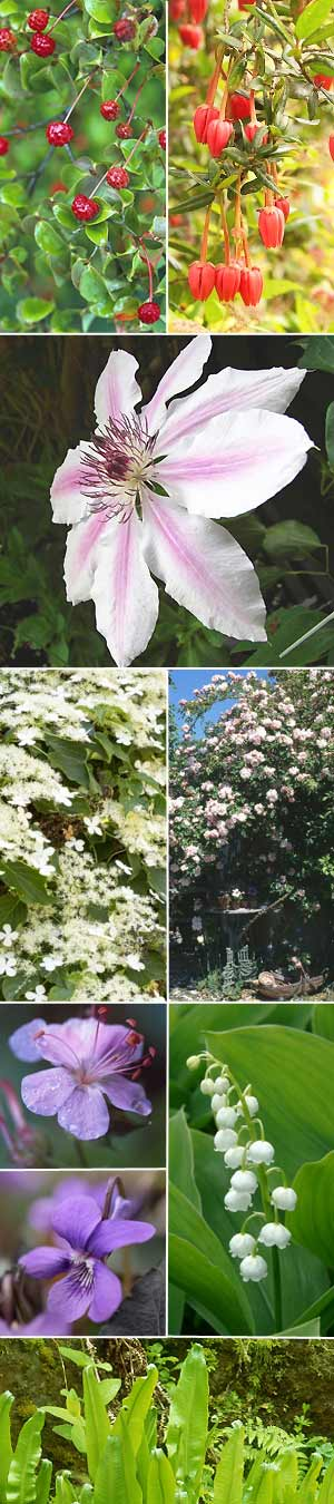 North-facing gardens: pick the best plants :: Plants for shady ...