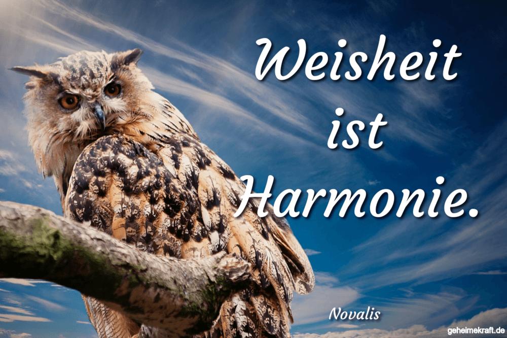 Weisheit Ist Harmonie Gefunden Auf Https Www Geheimekraft De Spruch 770 Eule Ausgestopftes Tier Eulen Tapete