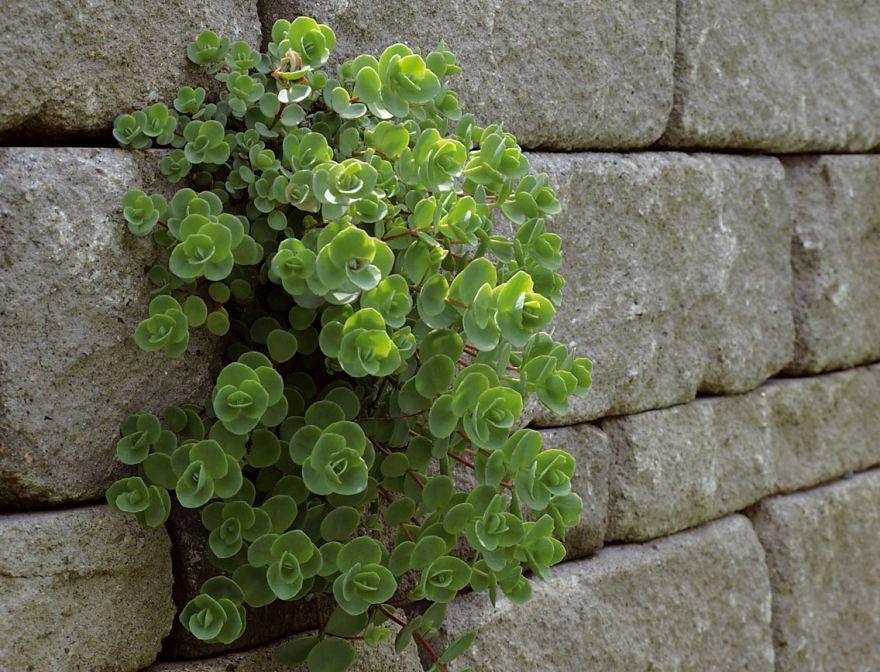 Pin von braun-steine auf Gartenmauern Pinterest Gartenmauern - haus und garten zeitschrift