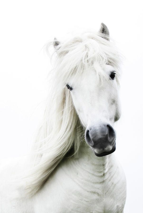 White on white, white dreamy horse.