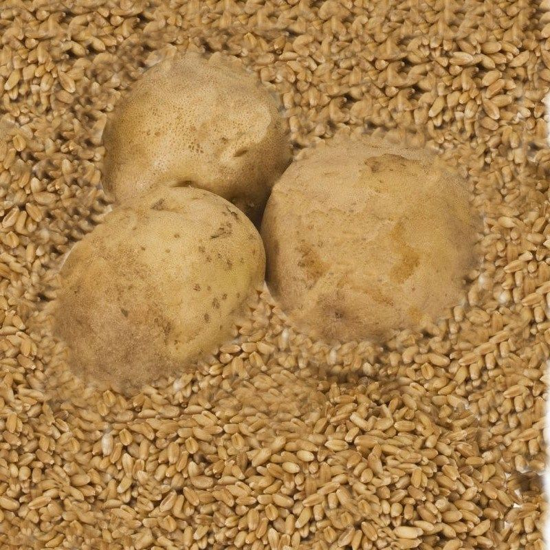 Cereali e patate le origini misteriose