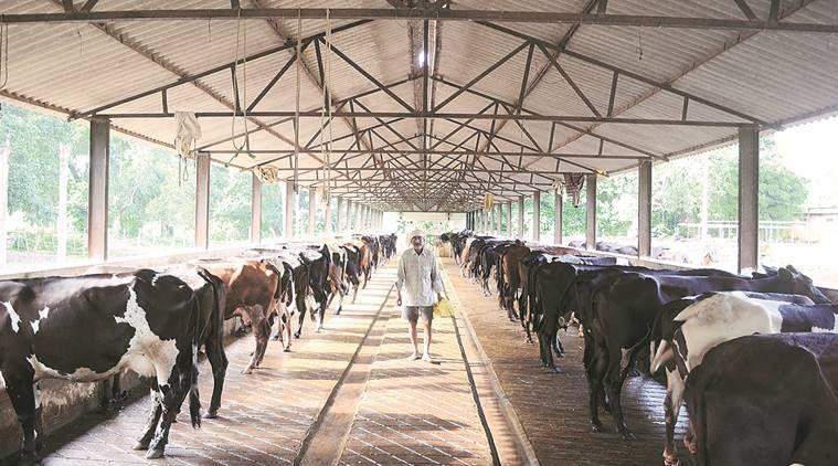 Imagen Relacionada Dairy Farms Agricultural Land For Sale Cattle Farming