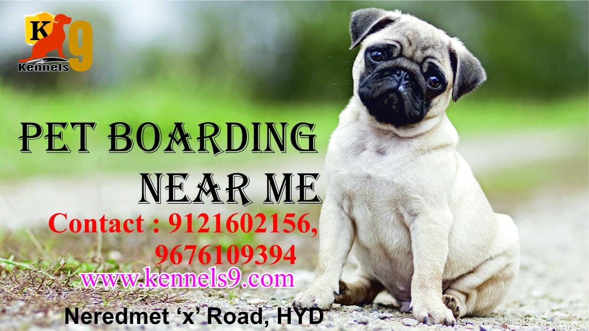 Pet Boarding Pugs Pet Boarding Dog Daycare