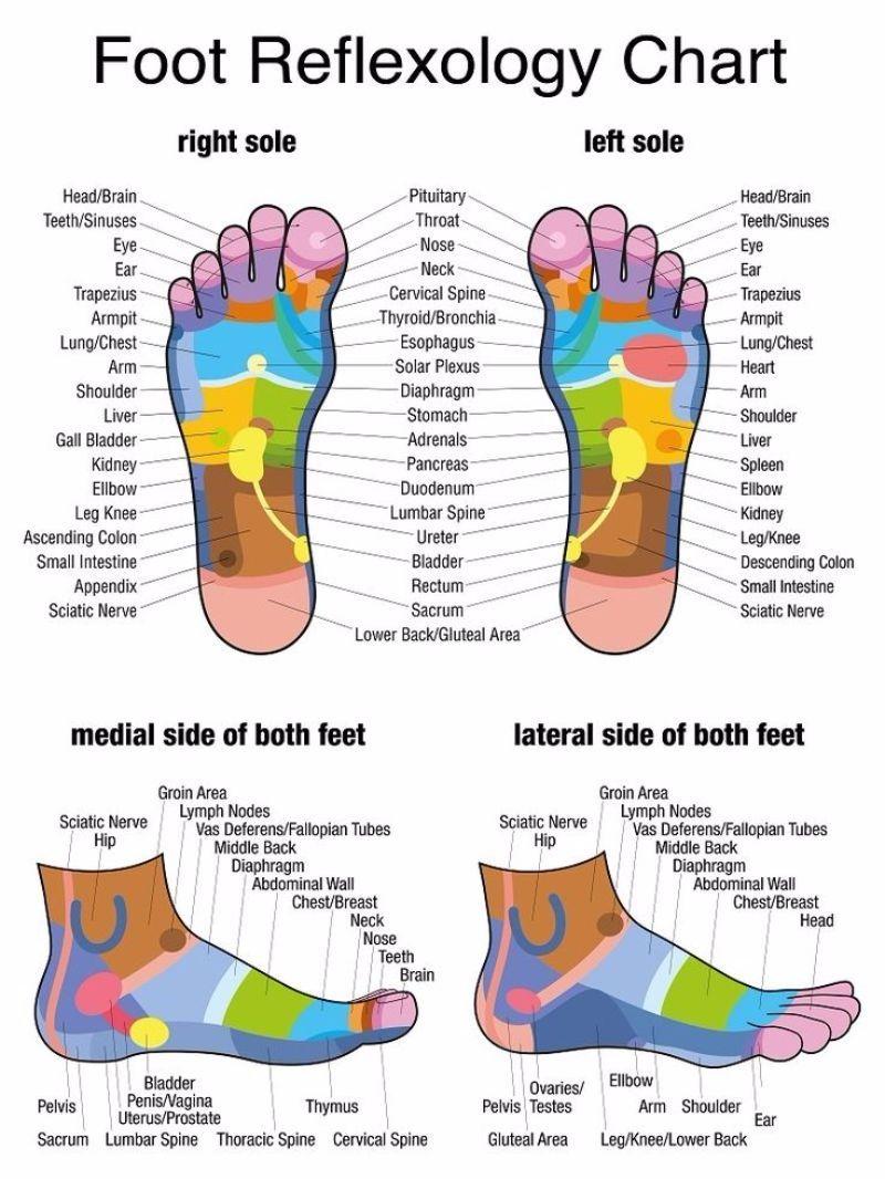foot reflexology chart  screenshot. foot reflexology chart  screenshot  therapeutic foot massage