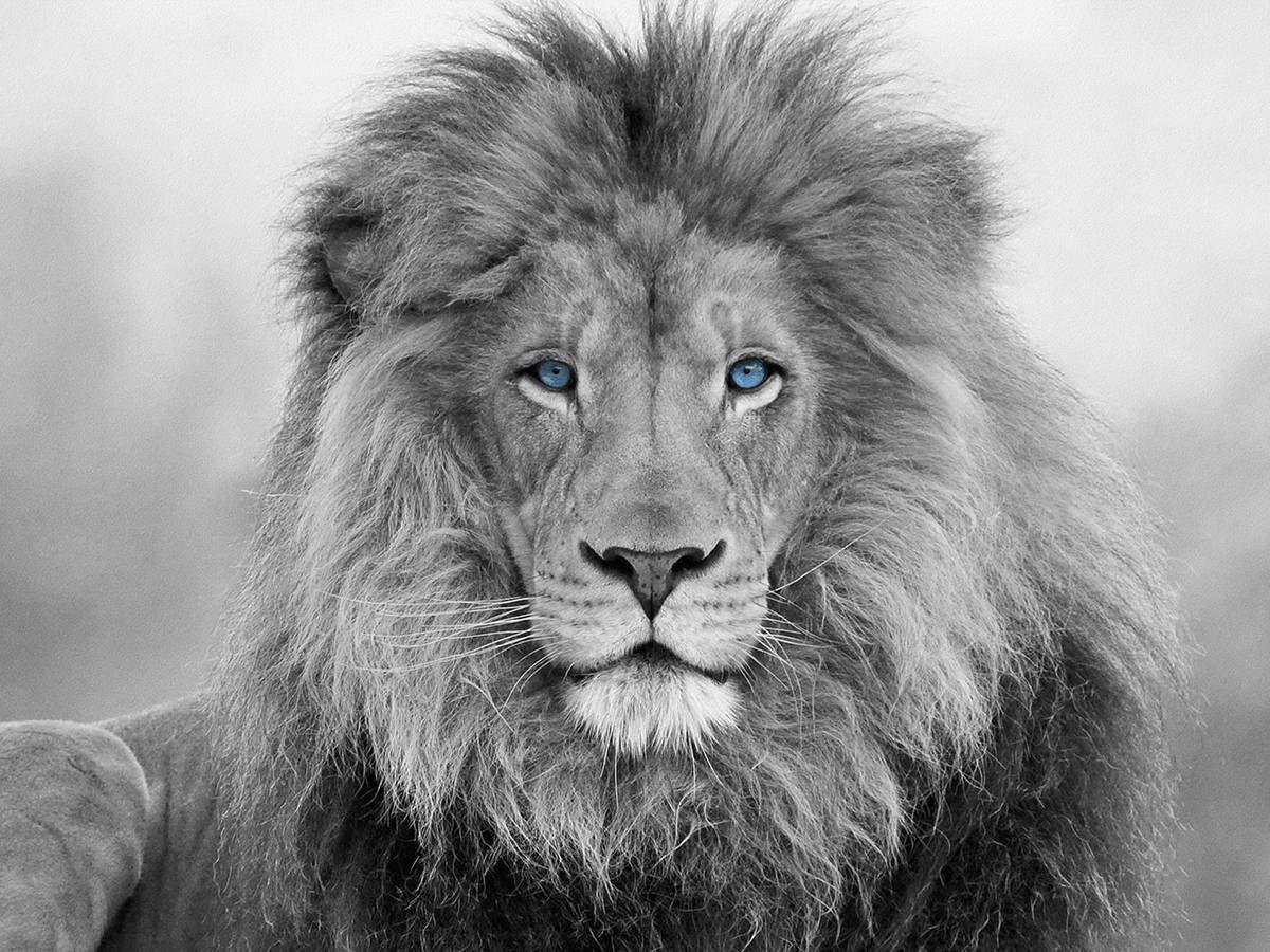 столетий найдите льва на картинке наиболее
