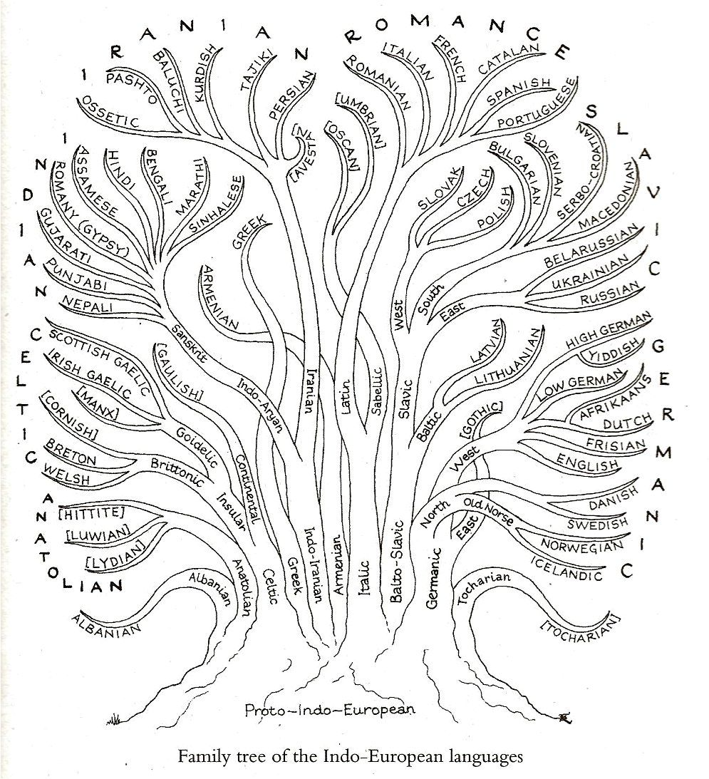 Diagram showing the family tree of Indo-European languages