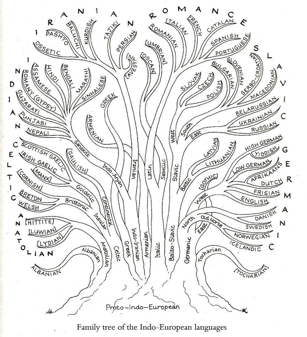 tree diagram in english grammar