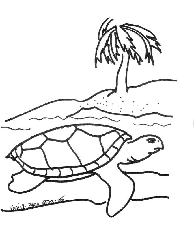 sea turtle print out - Google Search | Turtle coloring ...
