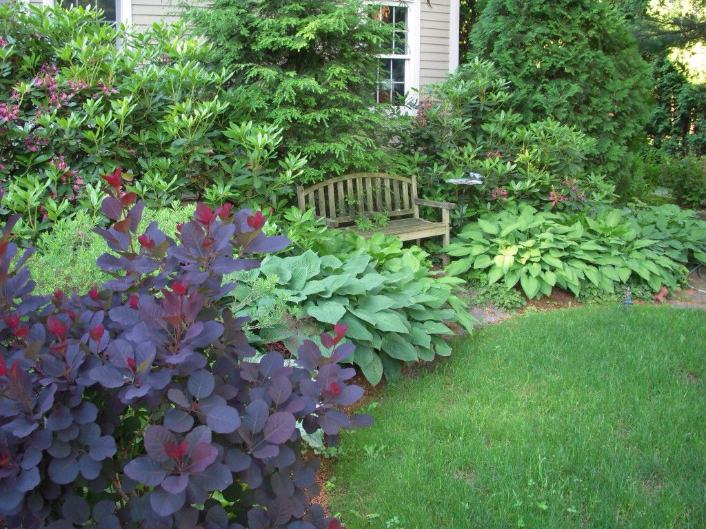 smoke bush hosta Landscape ideas Pinterest Evergreen