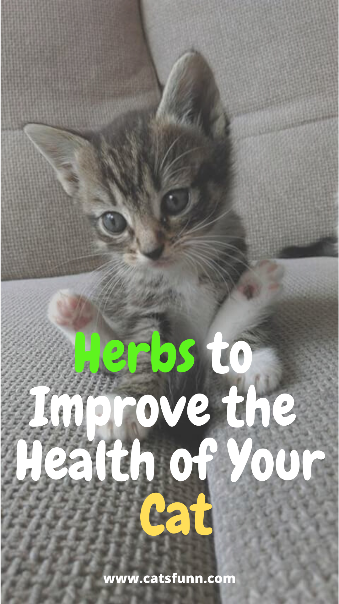 Herbs To Improve The Health Of Your Cat Funny Cat Memes Cats Cat Health