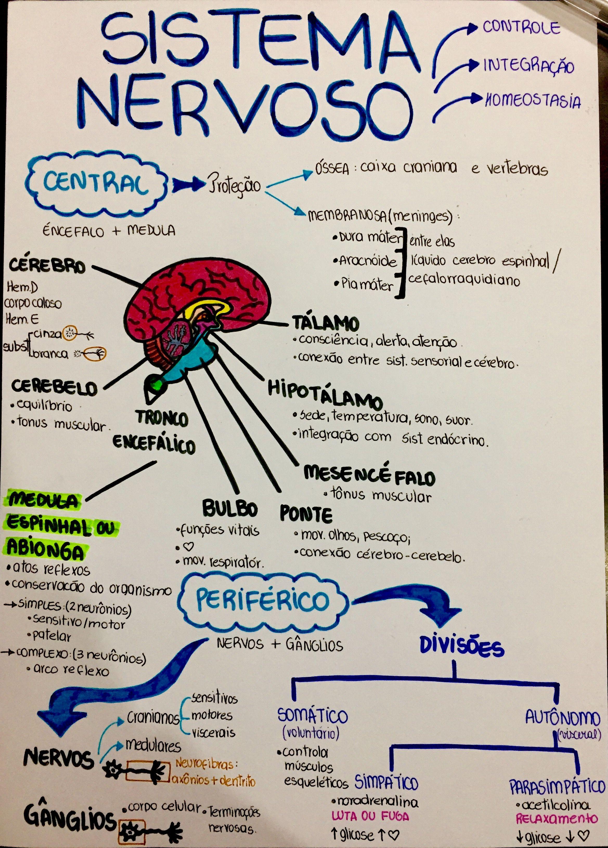 Sistema nevorso. | Regreso a clases | Pinterest | Biología, Medicina ...