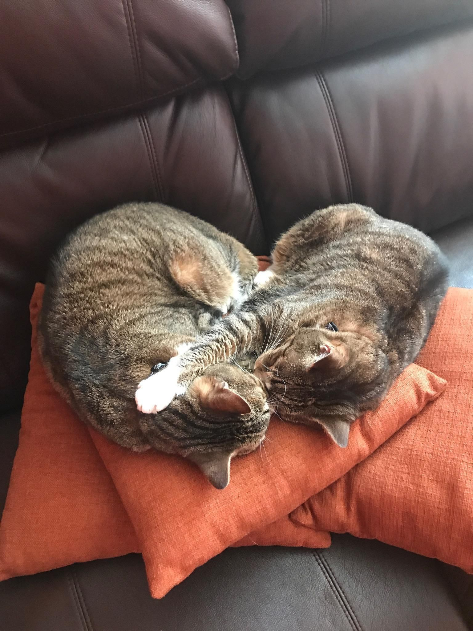 Buddy and Tootsie