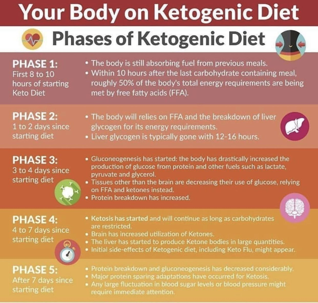 Stages Of Ketosis Keto Diet Ketogenic Diet Keto Diet For Beginners