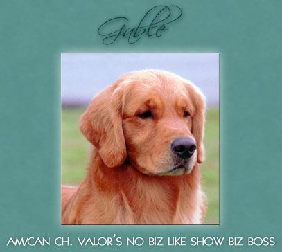 From An Arizona Golden Retriever Breeder I Love This Style Of