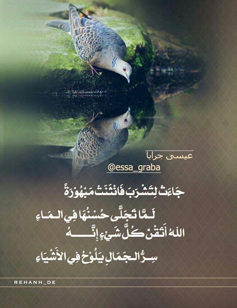 الشاعر عيسى جرابا Beautiful Arabic Words Earth Art Horse Pictures