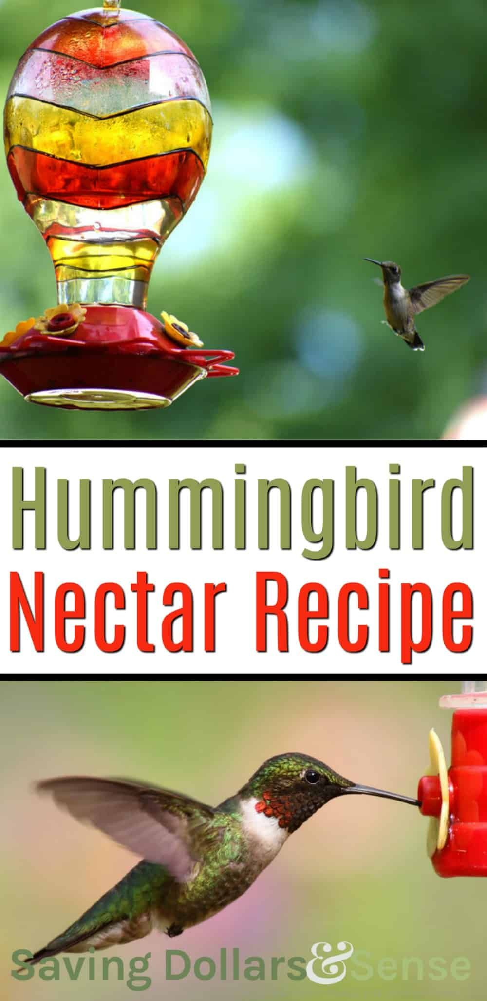 Diy This Easy Hummingbird Nectar Recipe Hummingbird Food