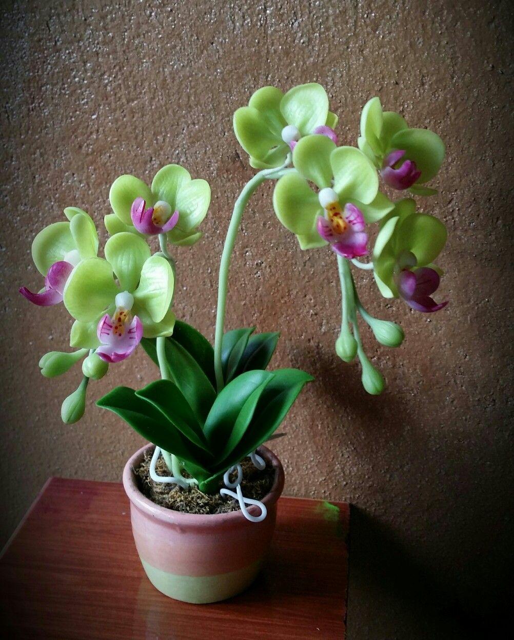 Pin av clay flowers på orkid flowers pinterest