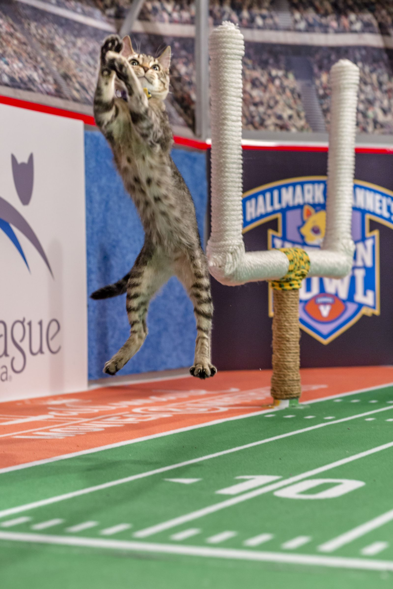 The Kitten Bowl Starting Lineup Is Here And It S Seriously Adorable Kitten Bowls Puppy Bowls Kitten