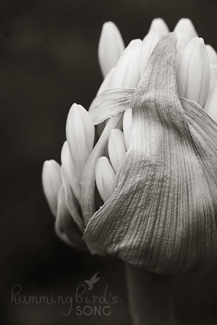 Black and white macro flower photography