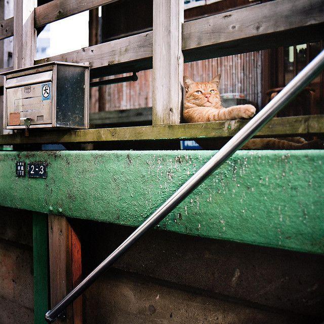 #Tokyo Cats #07  Like,Repin,Share, Thanks!