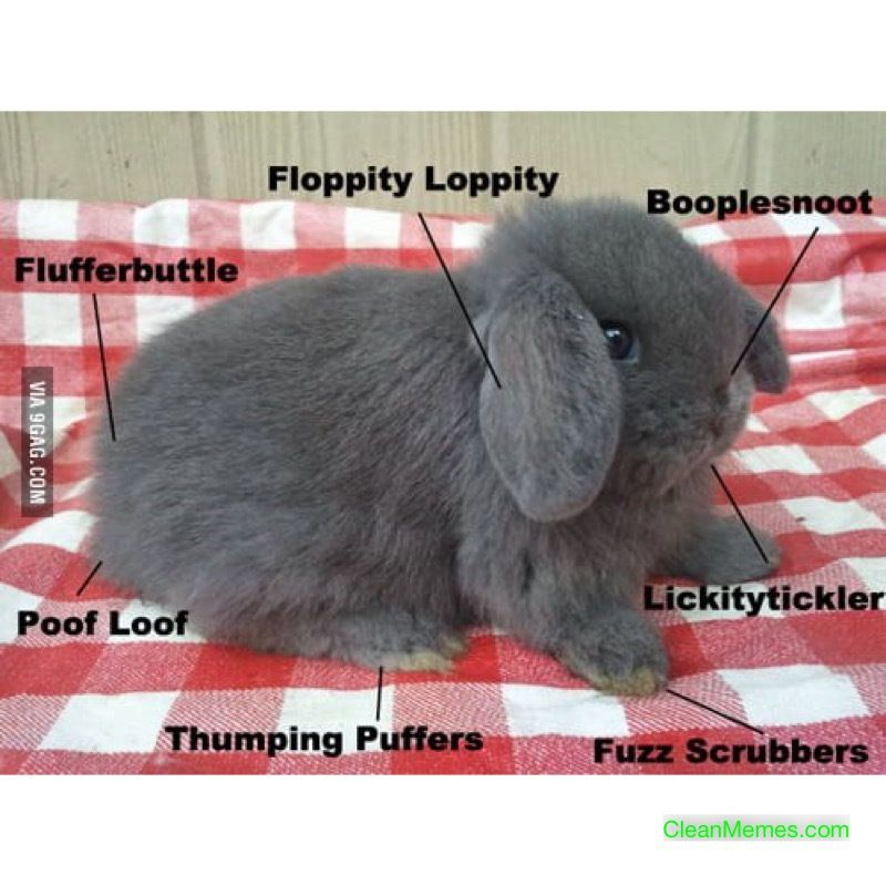 Image Result For Clean Dog Memes With Images Cute Baby Bunnies