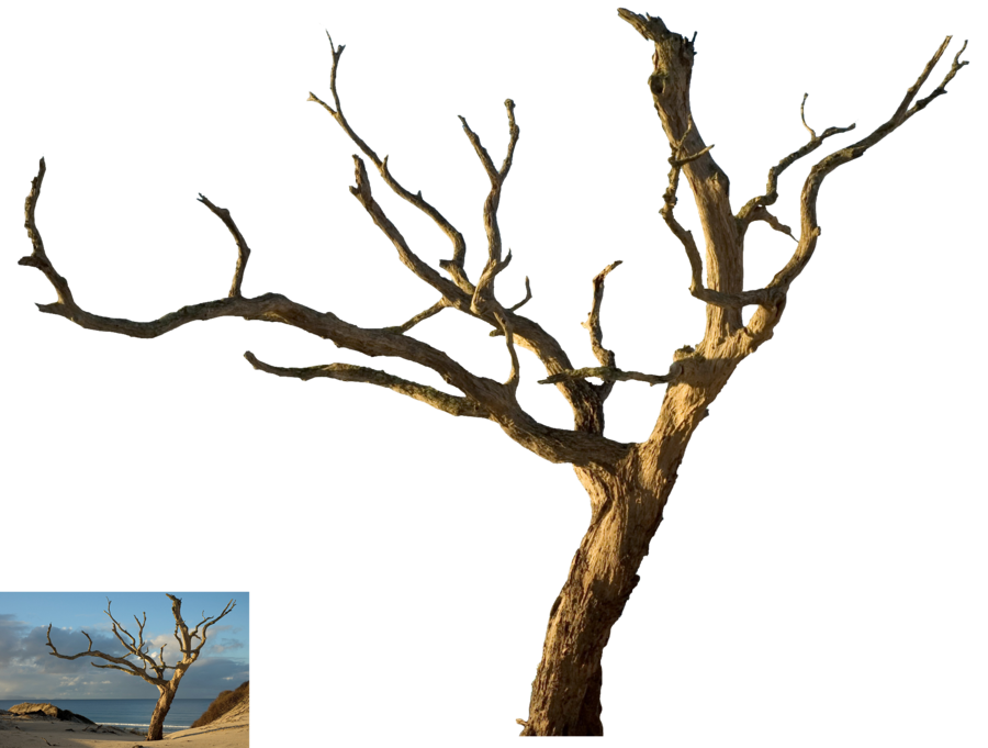 Isolated Dead Tree By Tothino On Deviantart Clipart Best Clipart Best Trees To Plant Pictures To Draw Tree