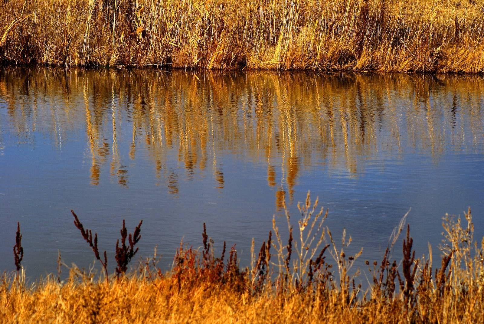 Autumn grass reflected