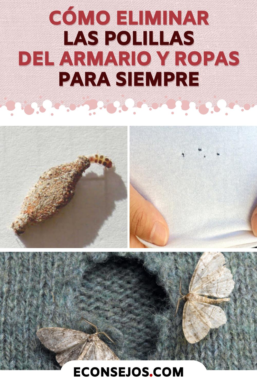 Como Acabar Con Las Polillas De La Madera Pin En Ideas Para El Hogar