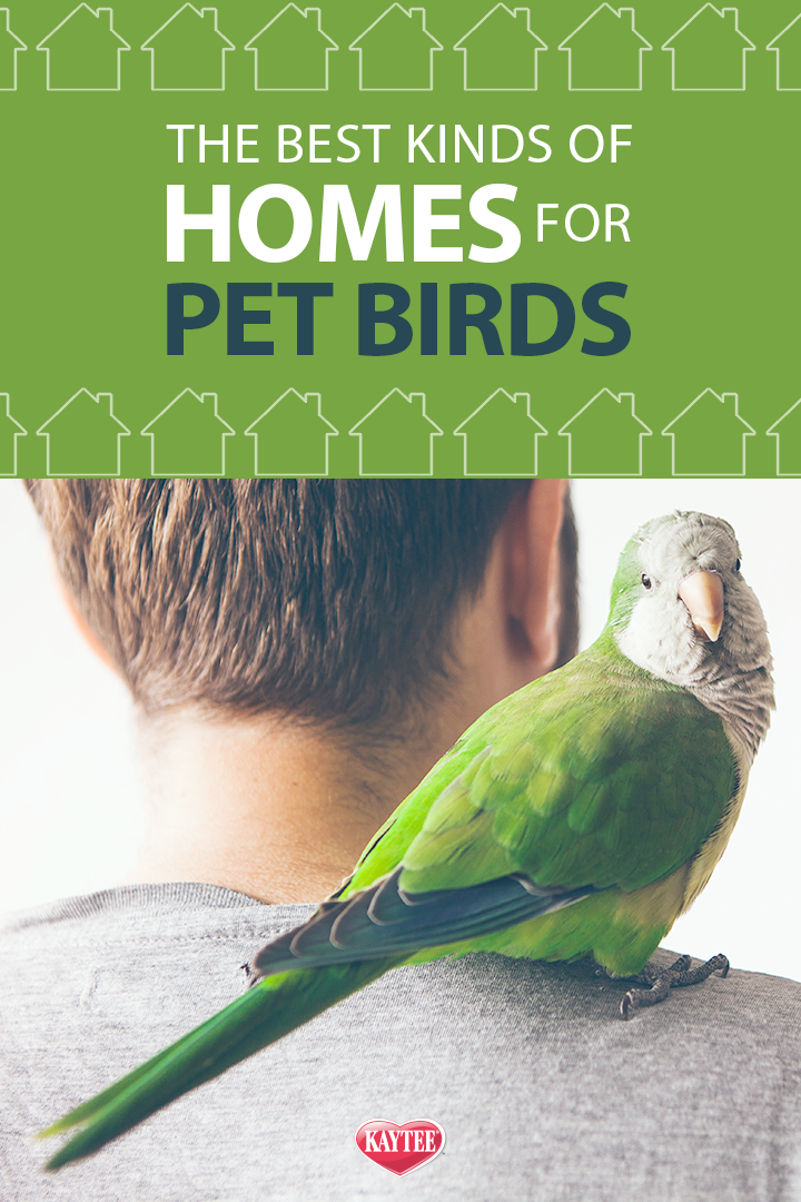 Did You Know Your Home Type Will Dictate Which Kind Pet Bird Is Best For You Best Pet Birds Pet Birds Pets