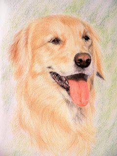 Dibujos Lápiz De Color Animales Buscar Con Google Draws