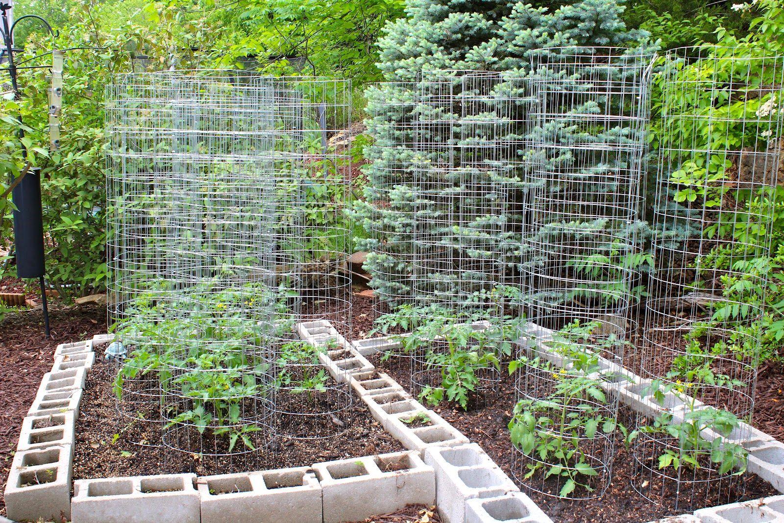 Small Vegetable Garden Ideas Queensland Garden Layout Vegetable Vegetable Garden Design Garden Layout