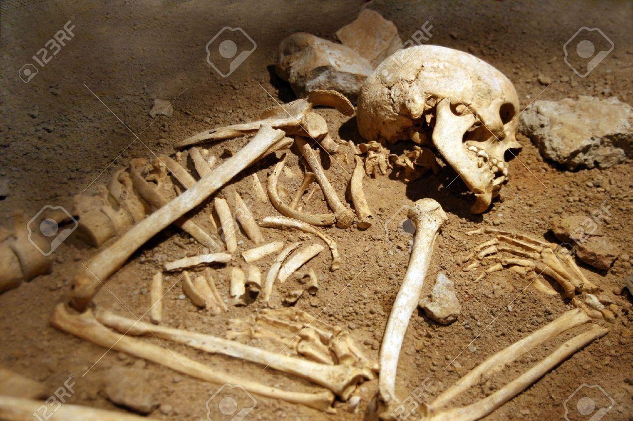 human bones - חיפוש ב-google   skulls   pinterest   search and, Skeleton