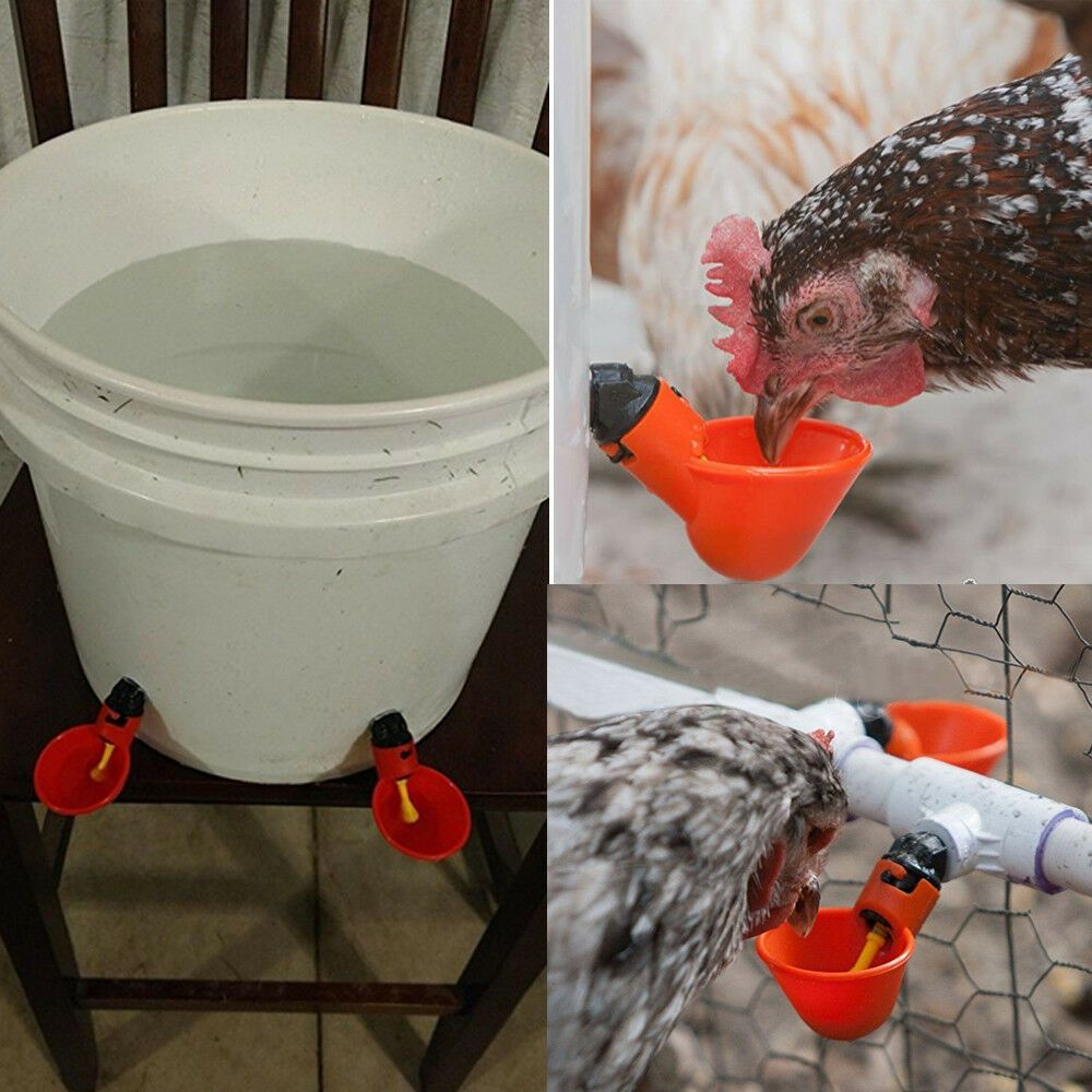 Packs Poultry Water Drinking Cup Automatic Drinker Chicken Hen Bird Feeder Chicken Chicken Chickendecor Packs Pou Chickens For Sale Drinking Cup Poultry
