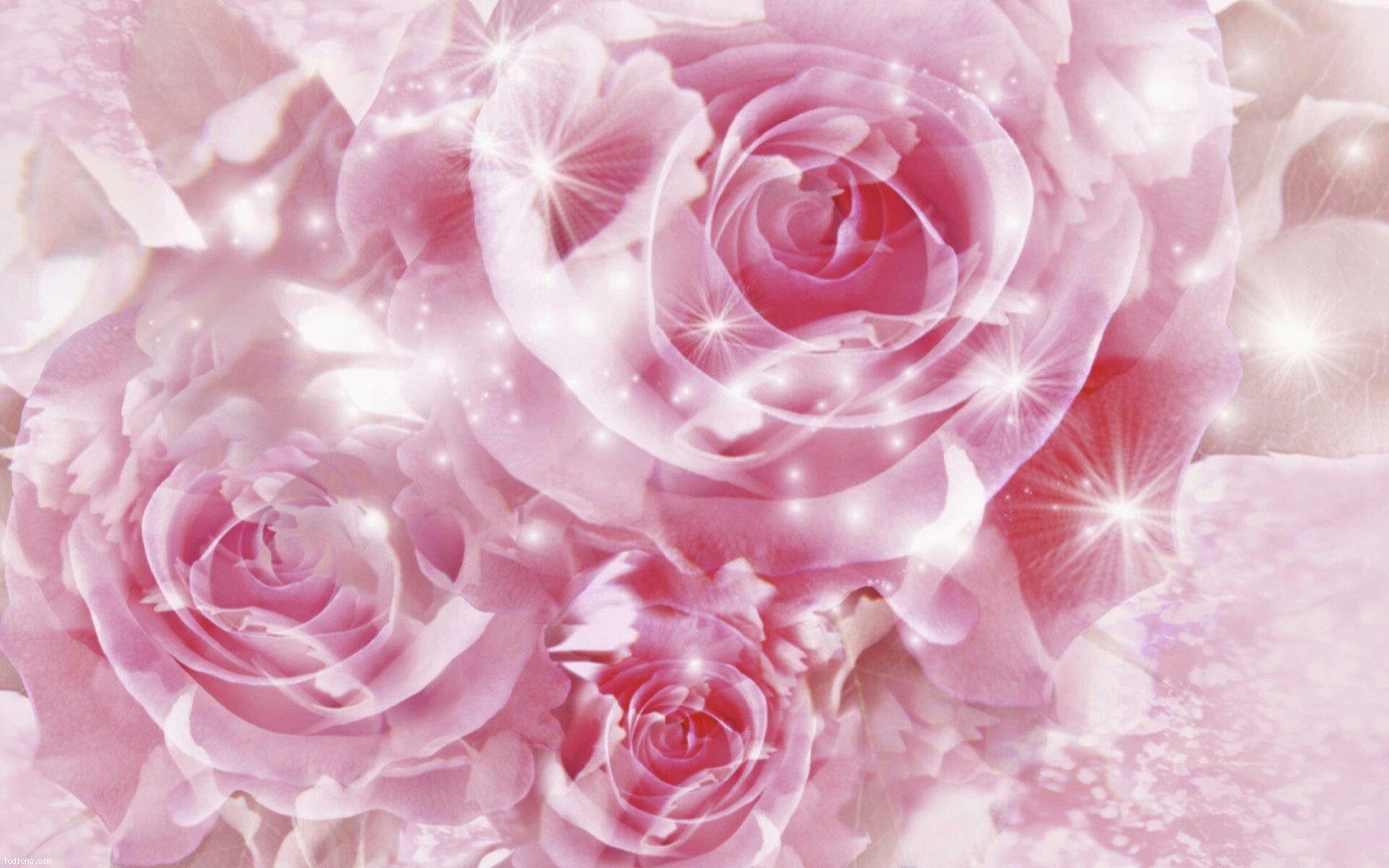 Shining Pink Roses Pink Flowers Wallpaper Beautiful Pink Roses Flower Wallpaper
