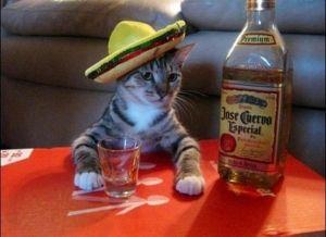 Divertidos Fotos De Gatos Graciosas Para Descargar Videos Chistosos De Gatos Fotos Con Gatos Fotos Divertidas De Animales