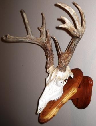 Texas european mount plaques shop ideas pinterest for European plaque template