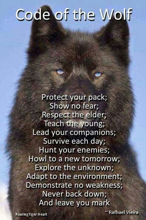 wolf sprüche weisheiten Code of the wolf | Tattoo | Pinterest | Wolf, Sprüche and Weisheiten wolf sprüche weisheiten