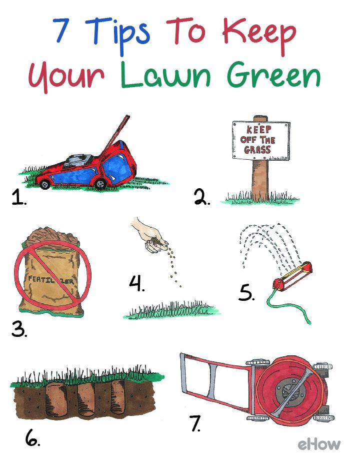 how to keep lawn green and healthy