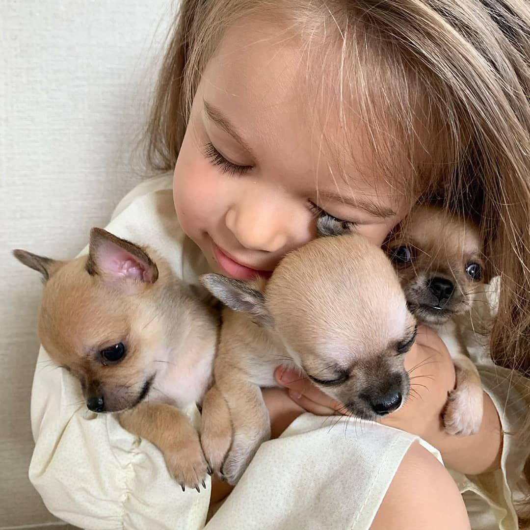 Pin Oleh I Love Chihuahua Di Beautiful Di 2020 Anjing Chihuahua Anak Anjing Lucu Anak Anjing