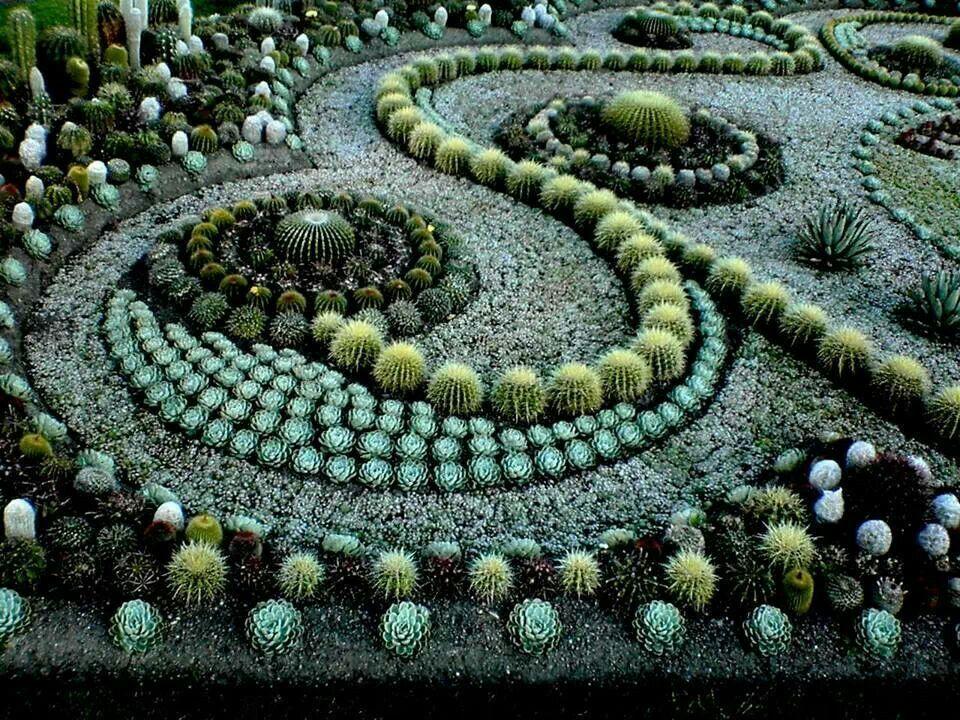 Cactus Mandala Garden | Garden | Pinterest | Gardens, Succulents