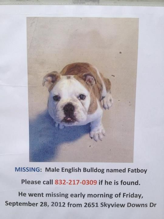Englishbulldog Puppy Missing In Houston Tx Help Find Fatboy