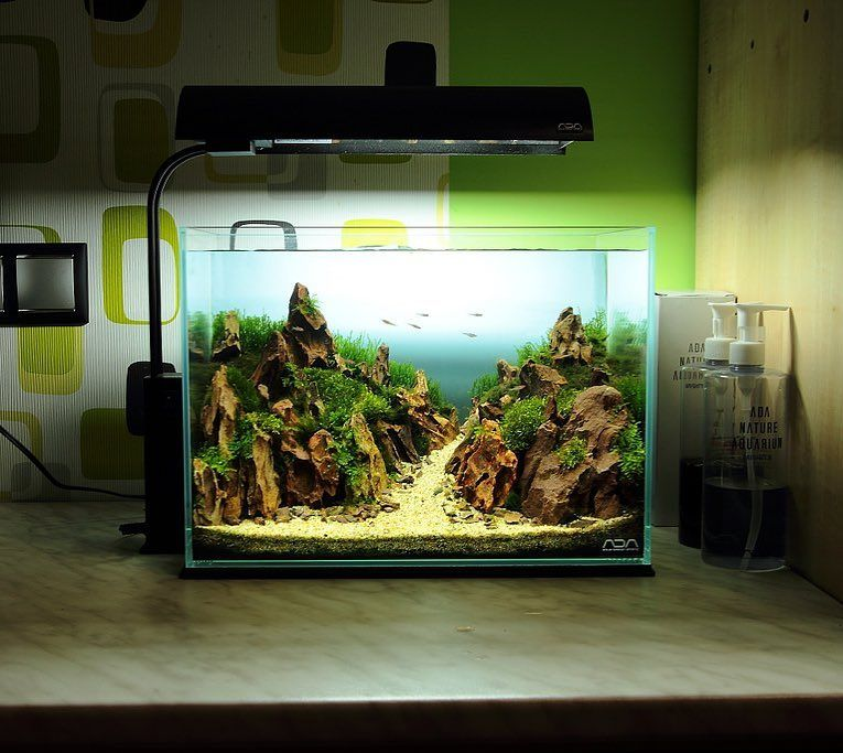 ADA Cube Garden Mini M By Szecsei Tibor. Beautiful Work! #AquariumDays