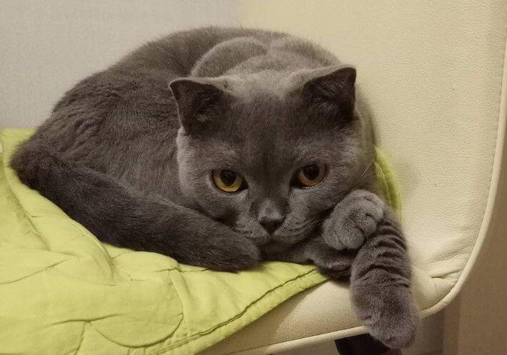 30 Best Gray Girl Cat Names Girl cat names, Cat names