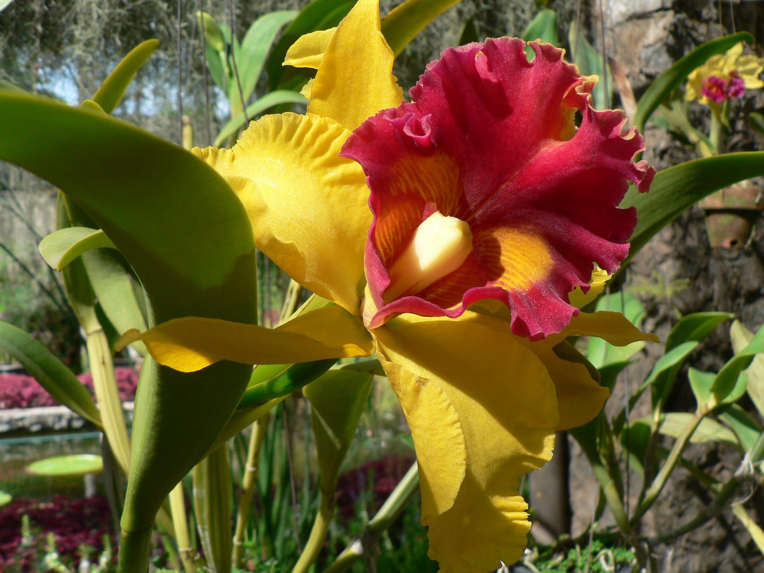 Garden orchids