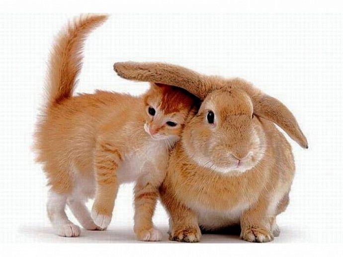 Восточный гороскоп для Кролика (Кота) на год Козы 2015